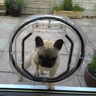 Dog Flap Installations Hyde