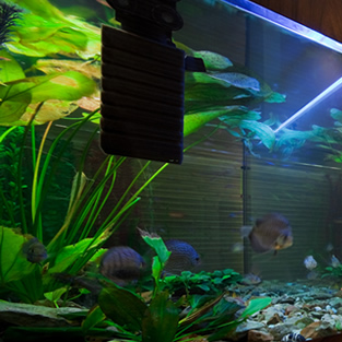 Fish Tank Glass Romiley
